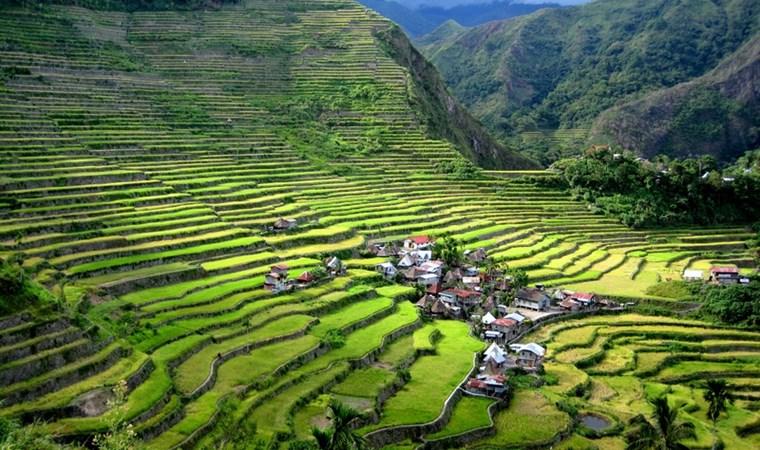 rice_terraces_3